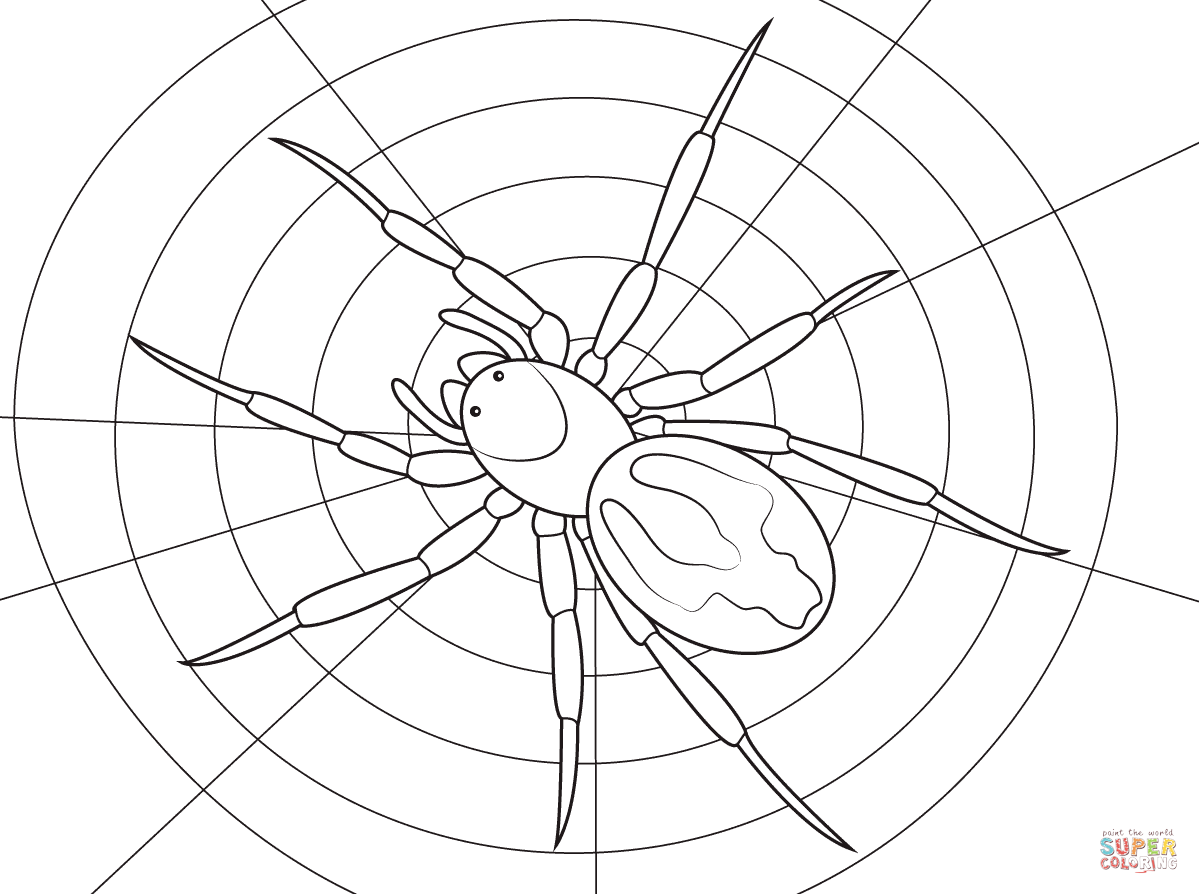 Lace Webbed Spider Coloring Page