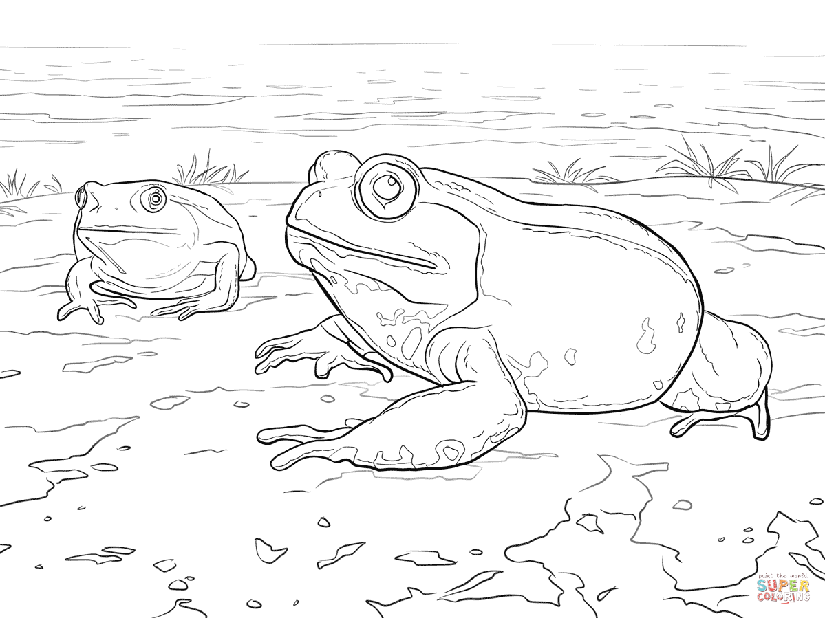 Madagascar Tomato Frog Coloring Page