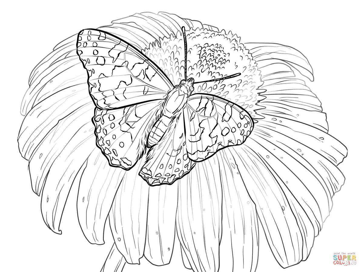 Painted Lady Butterfly Sits on a Flower coloring page