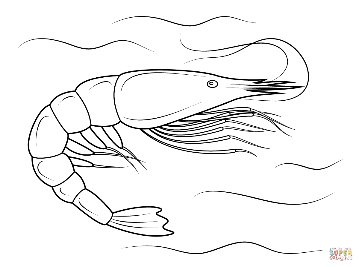 Penaeid Shrimp Coloring Page