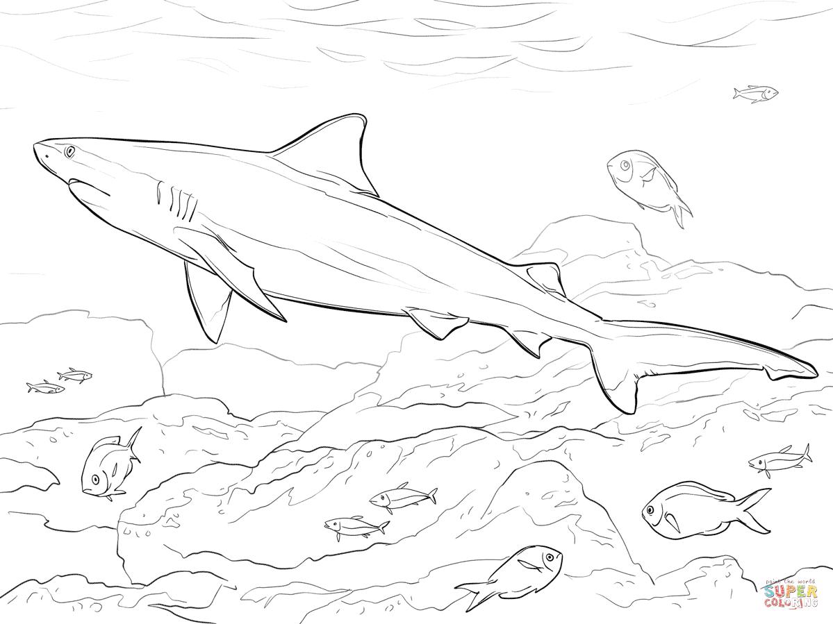Ausmalbild Realistischer Bullenhai