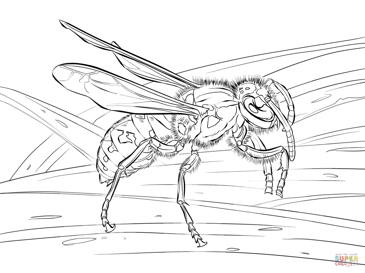 Realistic European Wasp Coloring Page