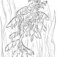 Realistic Leafy Seadragon Coloring Page Printable Desktop Sea Dragon Page Of Mobile Hd Pics