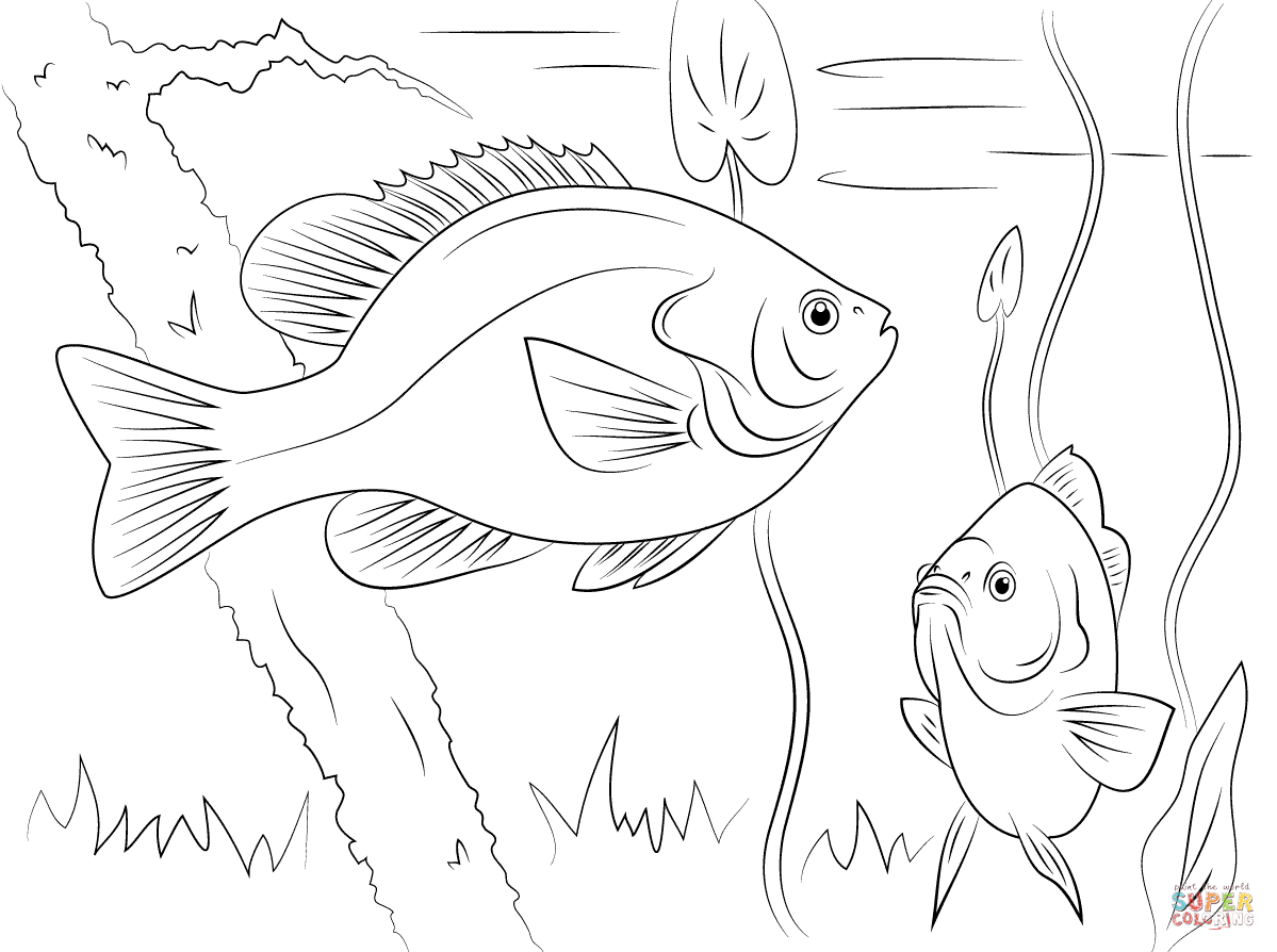 Crappie Coloring Pages Coloring Pages