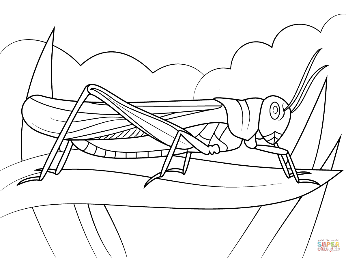 Rocky Mountain Locust Coloring Page