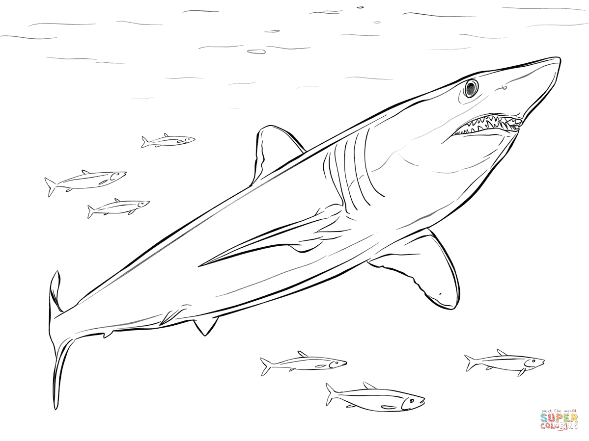 Shortfin Mako Shark Coloring Page Free Printable Coloring Pages