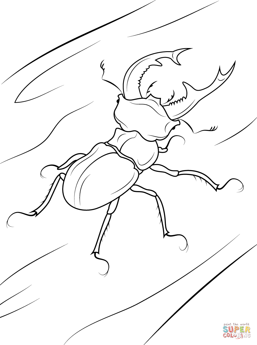 Goliath Beetle Coloring Page Coloring Pages