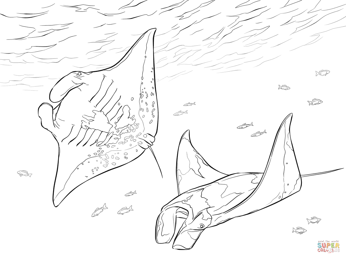 Two Manta Rays Coloring Page