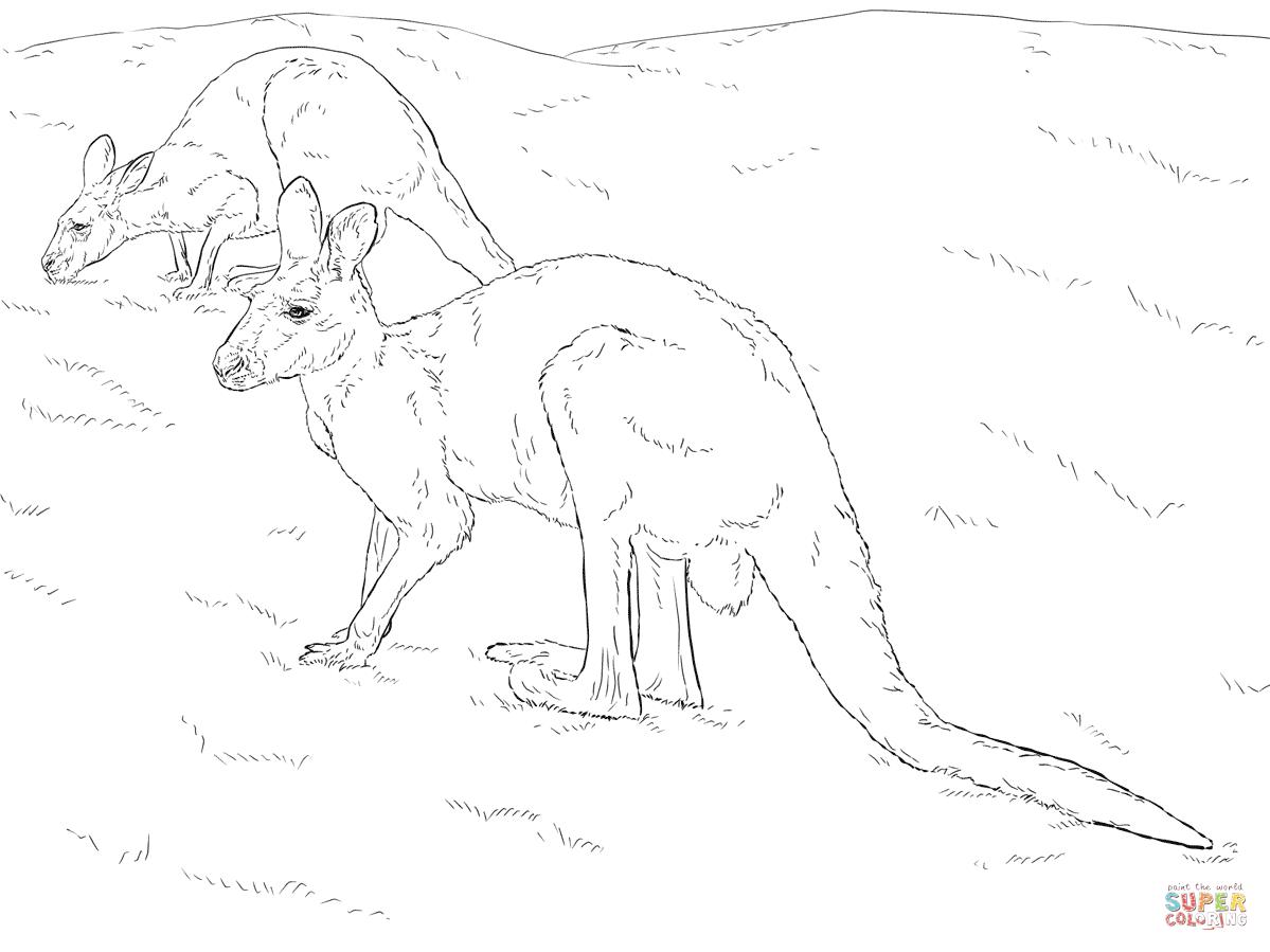 Two Red Kangaroos Coloring Page