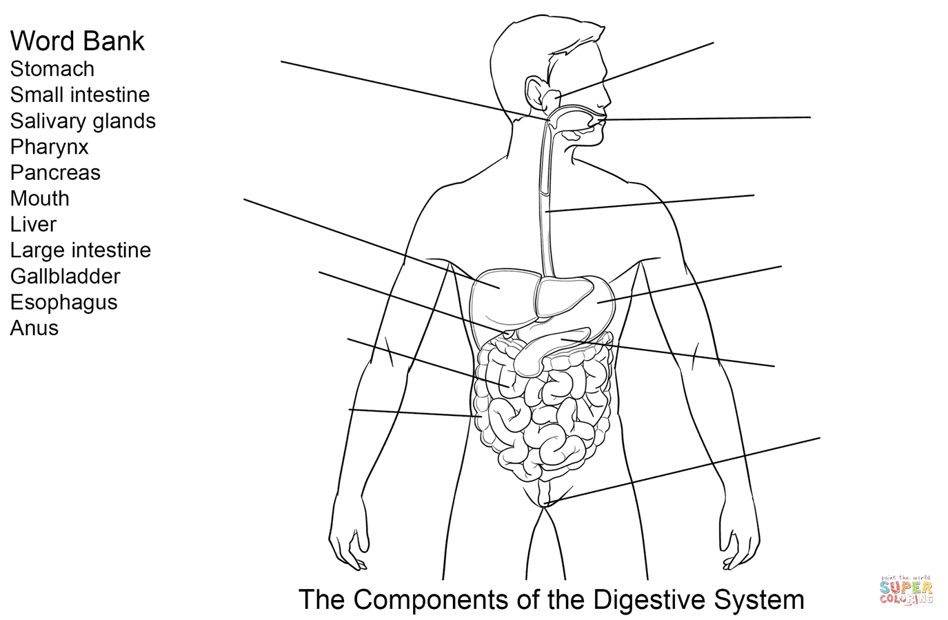hight resolution of click the components of digestive system worksheet
