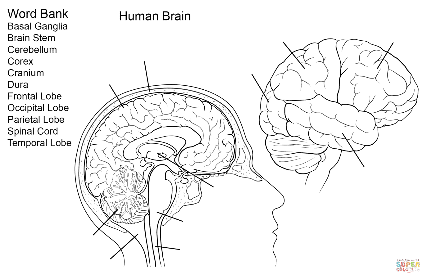 brain diagram without labels simple electronic circuit projects with diagrams human worksheet coloring page free printable
