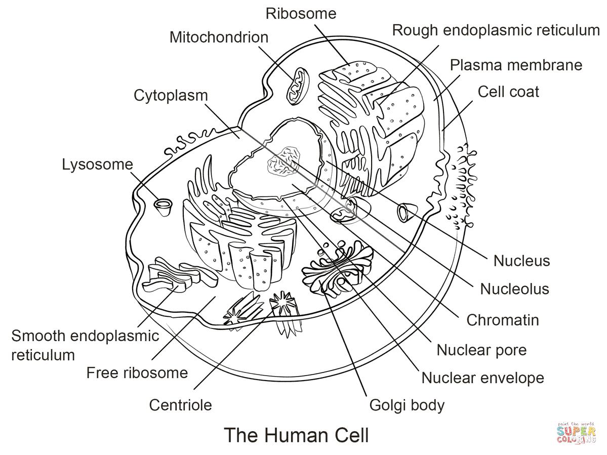Cells Coloring Worksheet