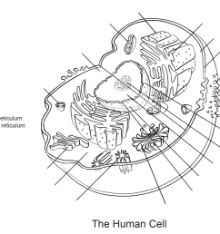 click the human cell worksheet  [ 1375 x 899 Pixel ]
