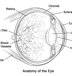 click the human eye anatomy  [ 1199 x 899 Pixel ]