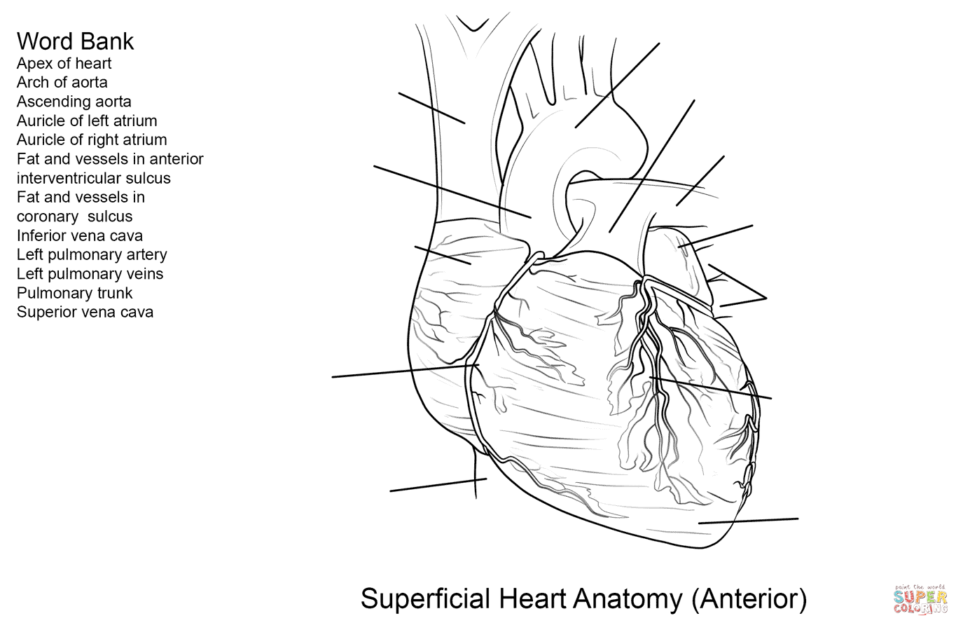 Heart Diagram Label Worksheet