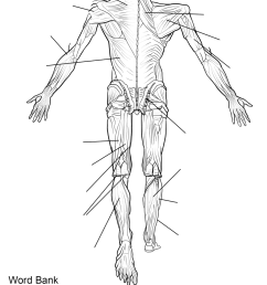 label the muscles of the body worksheet careless me [ 899 x 1374 Pixel ]
