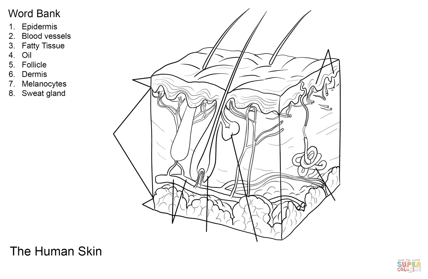 Youre Skin Worksheet