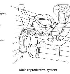 click the male reproductive system worksheet  [ 1375 x 899 Pixel ]
