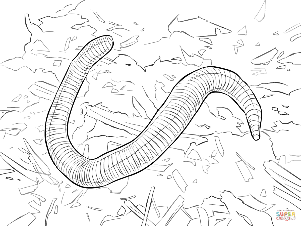Red Wiggler Worm Coloring Page