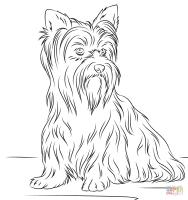 Ausmalbild Yorkshire Terrier   Ausmalbilder kostenlos zum ...