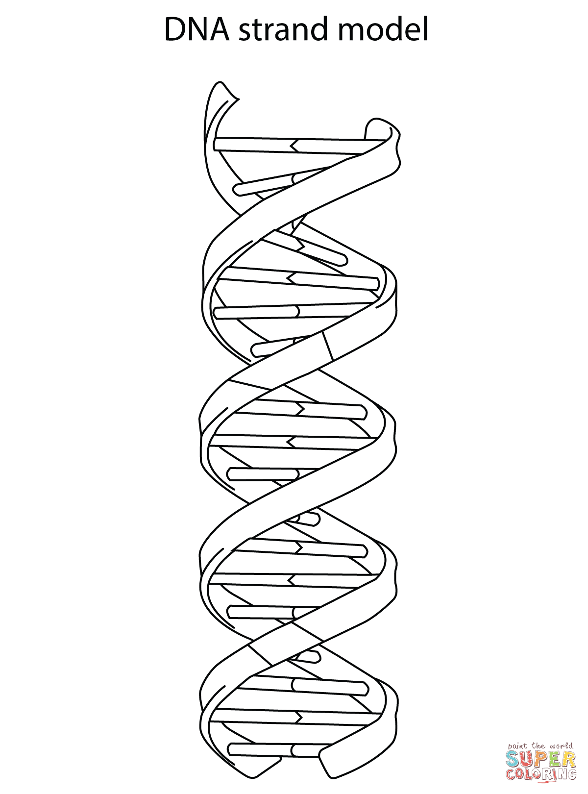 Dna Strand Model Coloring Page