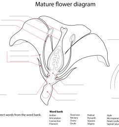 click the flower diagram worksheet  [ 1612 x 1022 Pixel ]