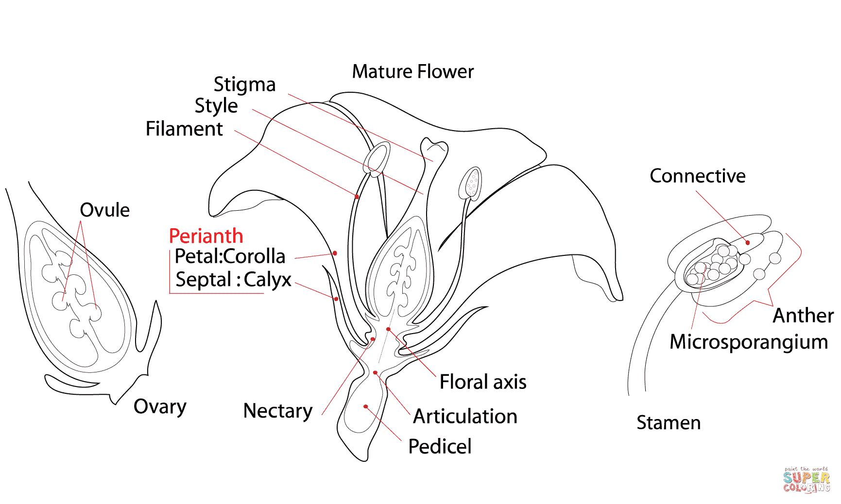 Ausmalbild Blumen Struktur