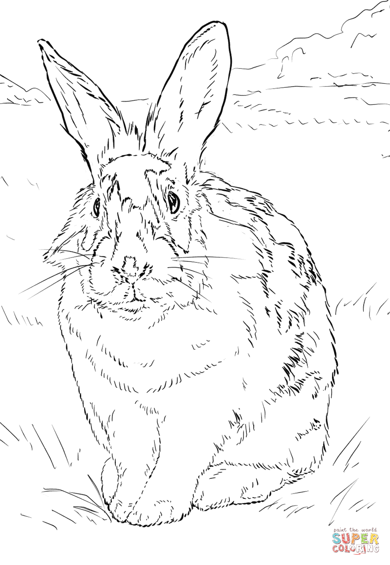 Dibujo De Conejo Blanco Y Negro Para Colorear Dibujos