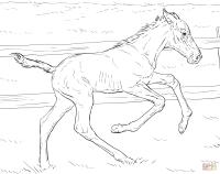 Ausmalbilder Fohlen Ausdrucken Pferdebilder Zum