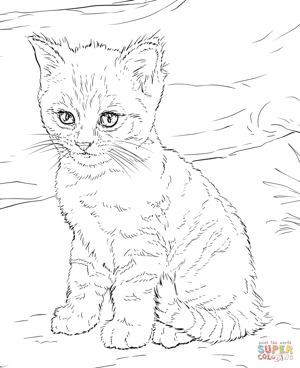 Cute Kitten Coloring Page Free Printable Coloring Pages