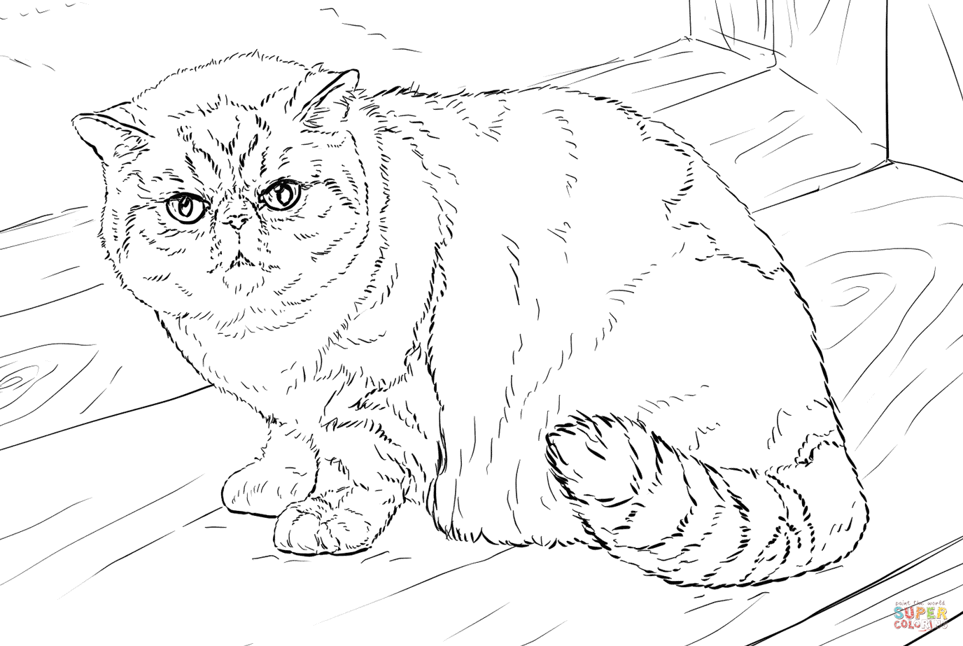 Exotic Shorthair Cat Coloring Page
