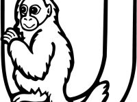 Lettercoloring Coloring Widescreen Letter Animals Of Smartphone Hd Pics Uakari Monkey Page