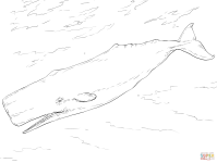 Whale Sperm Coloring Page Sketch Coloring Page