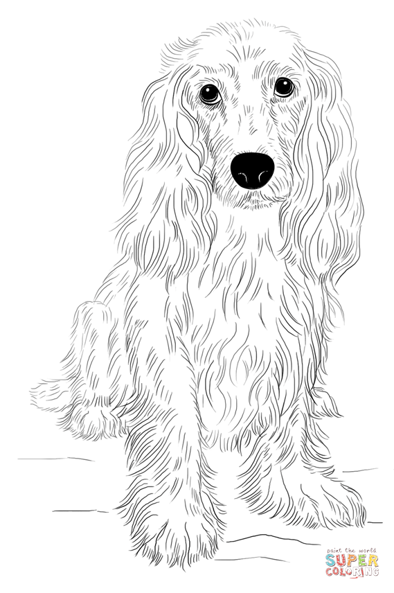 Lps Coloring Pages Cocker Spaniel