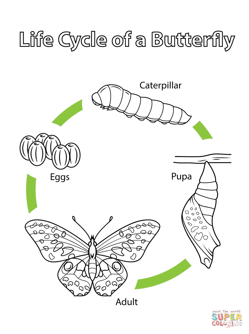 Life Cycle Coloring Page Of A Seed To Plant Sketch
