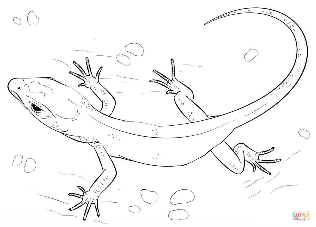 Lizard Coloring Page Free Printable Pages