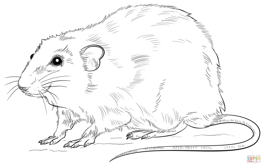 Rats Full Form