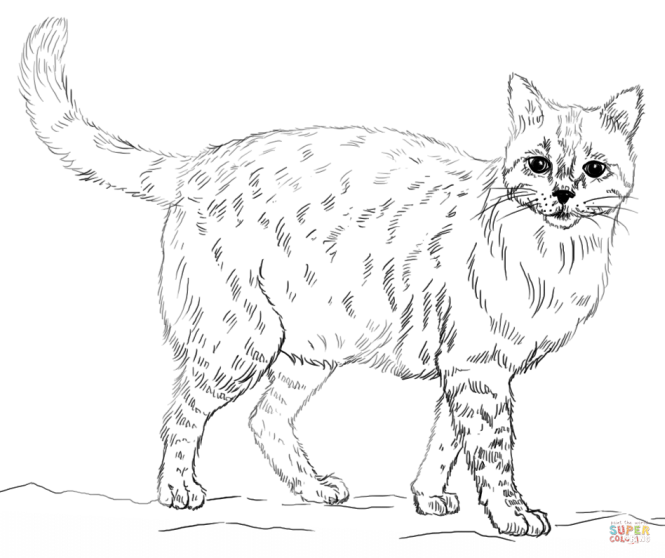 Click The Realistic Cat Coloring Pages