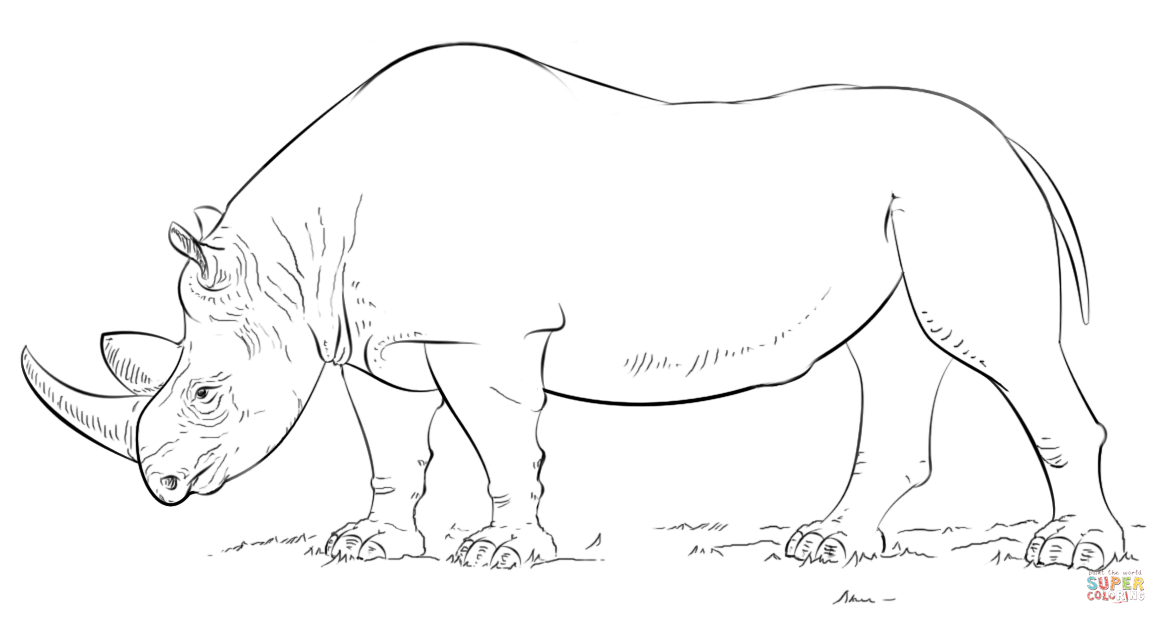 Rhino Coloring Pages