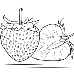 Strawberry Fruit Diagram Cole Hersee Wiper Switch Wiring Coloring Page Free Printable Pages