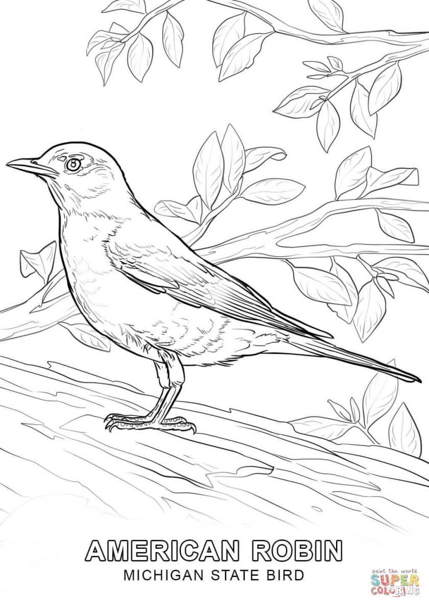 michigan state bird coloring page  free printable