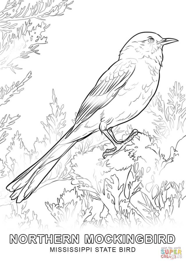 Mississippi State Bird coloring page  Free Printable Coloring Pages