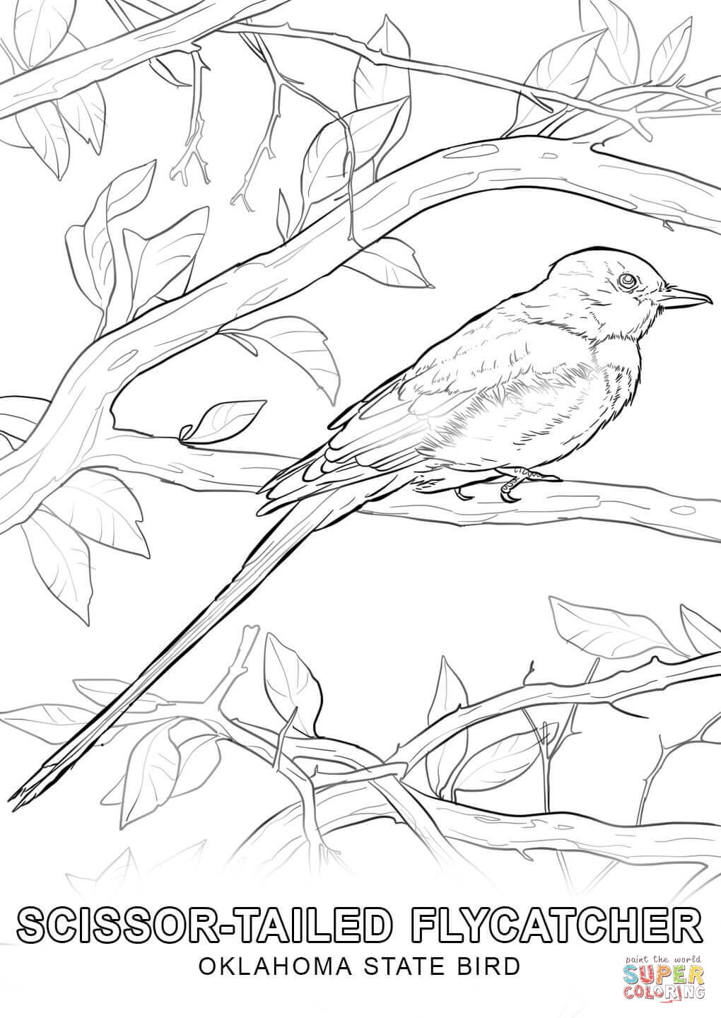 Oklahoma State Bird Drawing Sketch Coloring Page