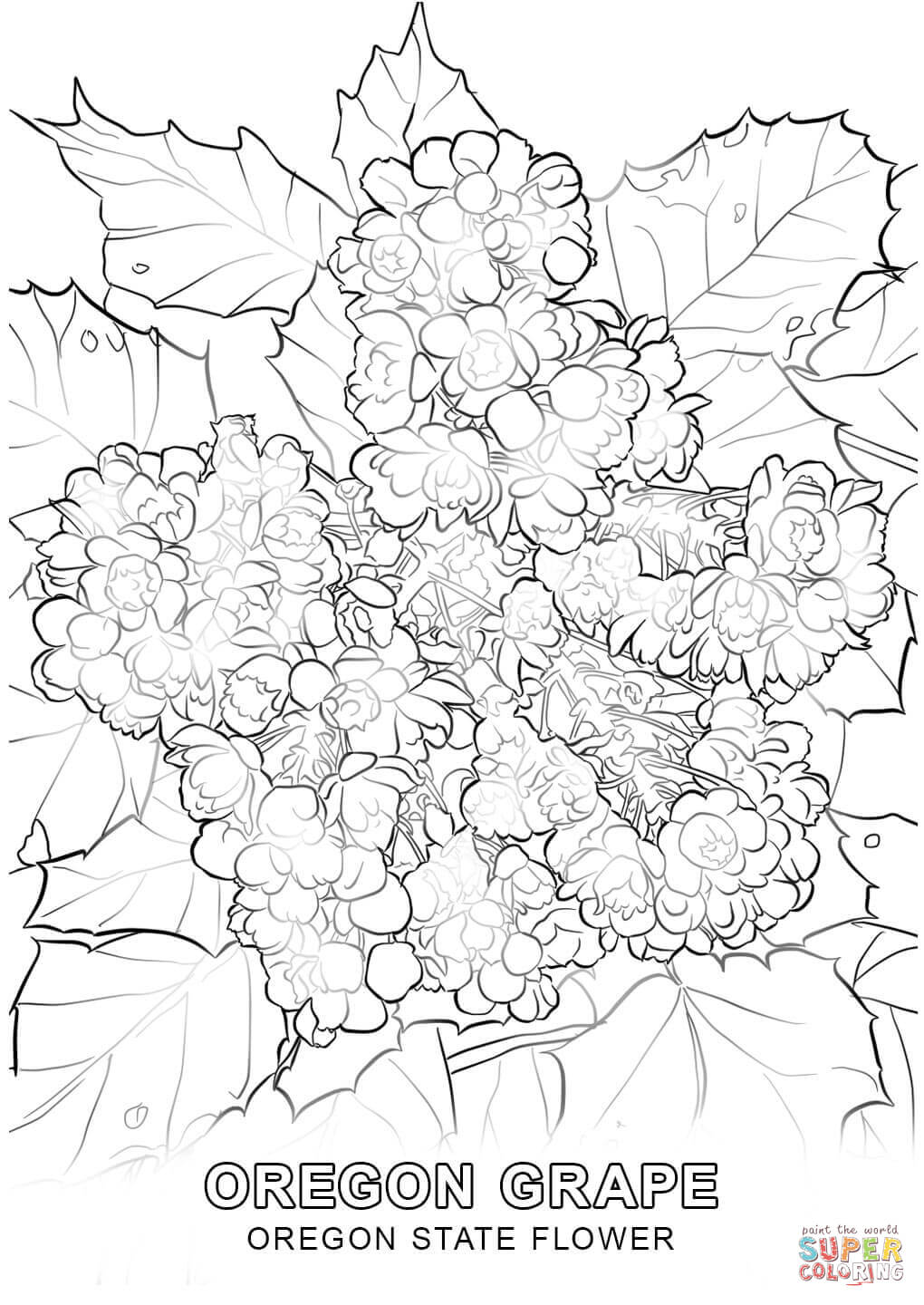 Oregon State Coloring Page Coloring Pages