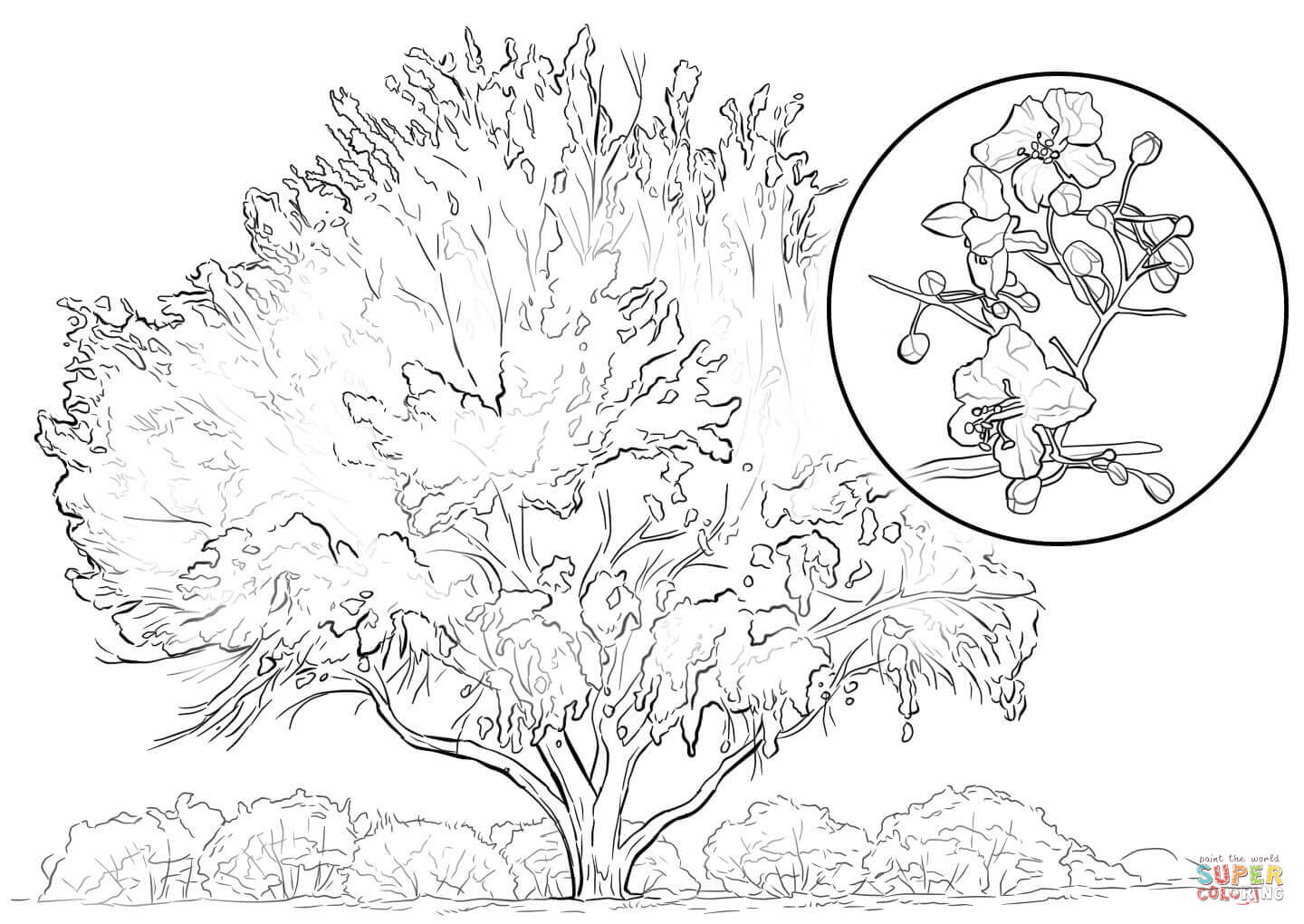 Yellow Palo Verde Coloring Page