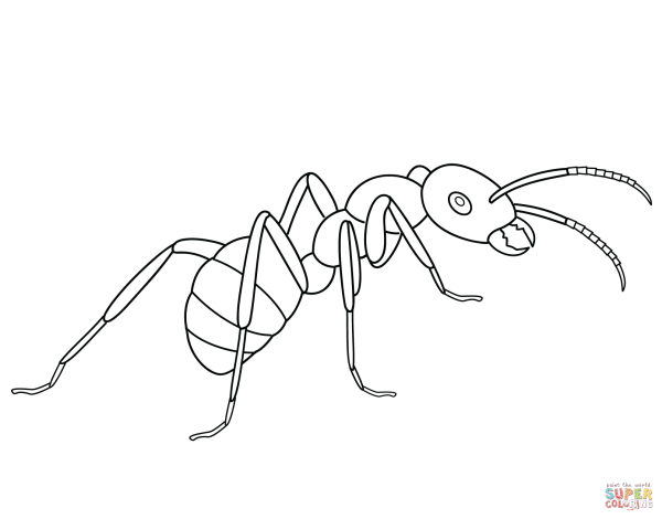 ant coloring page free printable