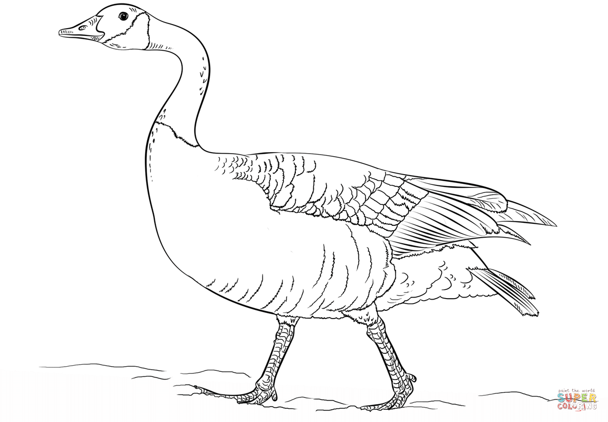 Canadian Goose Walking Coloring Page