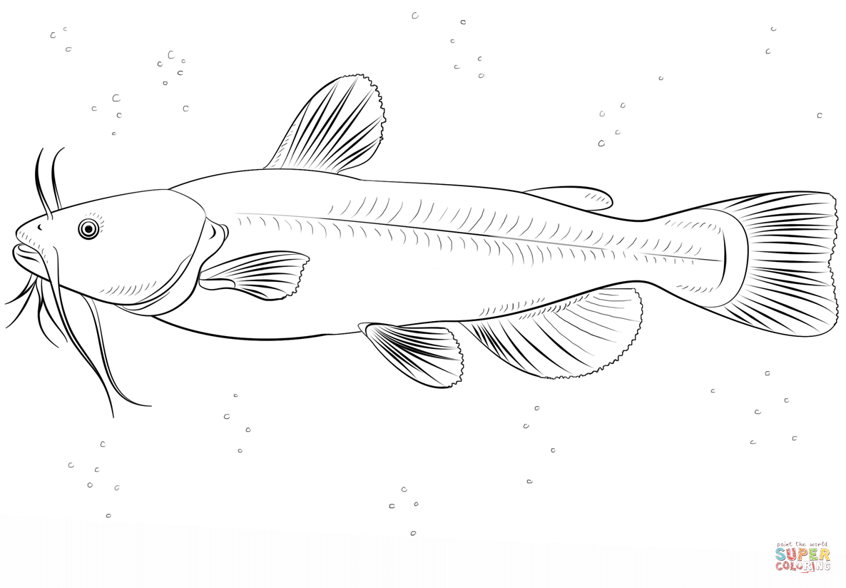 Bullhead Catfish Coloring Page Free Printable Coloring Pages