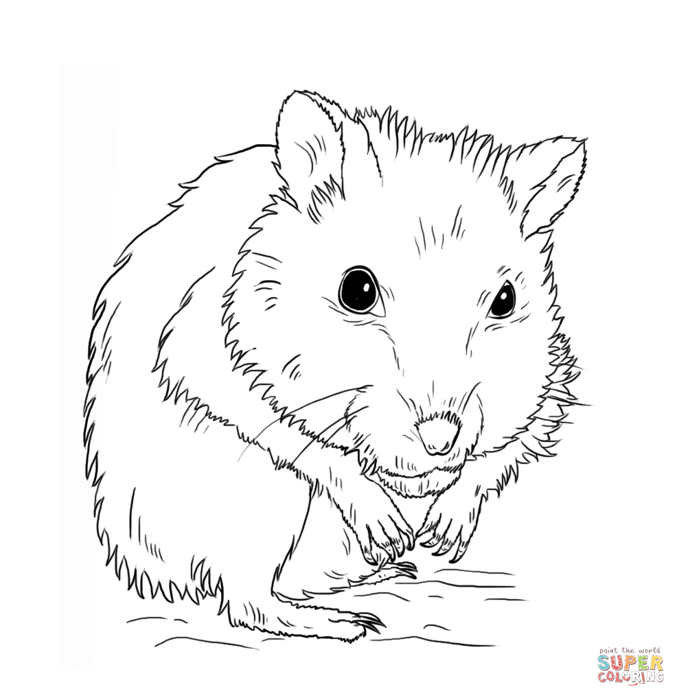 Hamster Coloring Page. Cheap Zhu Pets Coloring Picture Cute Hamster ...
