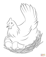 Hen Sits on Eggs coloring page   Free Printable Coloring Pages
